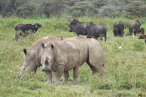 Lake Nakuru National Park (153)
