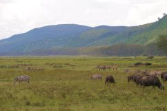 Lake Nakuru National Park (155)