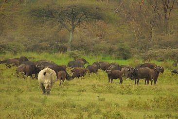 Lake Nakuru National Park (157)