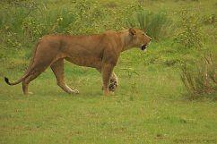 Lake Nakuru National Park (176)