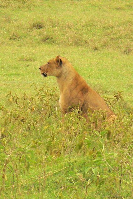 Lake Nakuru National Park (184)