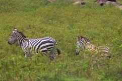 Lake Nakuru National Park (190)