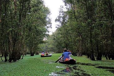 Mangrove (11)