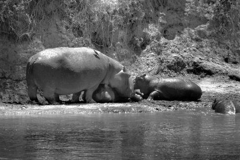 Masai Mara National Reserve (122)