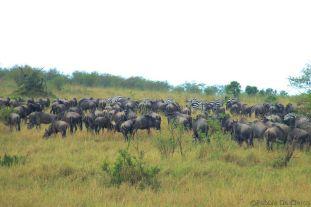Masai Mara National Reserve (161)