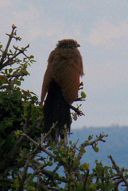Masai Mara National Reserve (164)