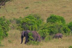 Masai Mara National Reserve (186)