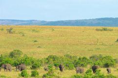 Masai Mara National Reserve (188)