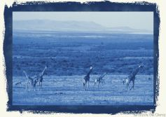 Masai Mara National Reserve (204)