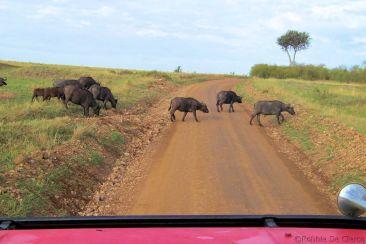 Masai Mara National Reserve (24)