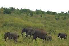 Masai Mara National Reserve (45)