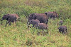 Masai Mara National Reserve (47)