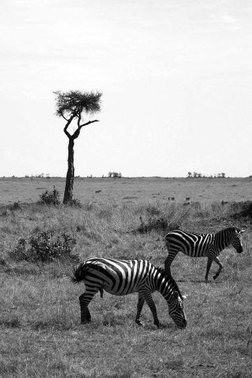 Masai Mara National Reserve (85)