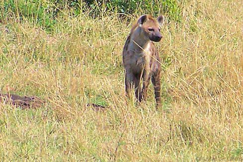 Masai Mara National Reserve (87)