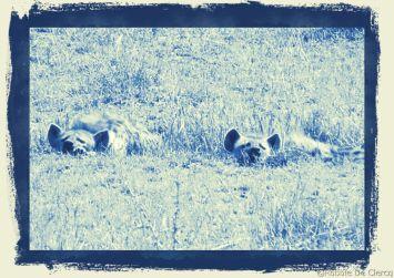 Masai Mara National Reserve (93)