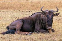 Ngorongoro (14)