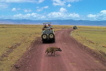 Ngorongoro (29)