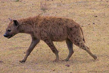 Ngorongoro (30)