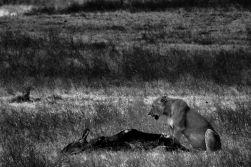 Ngorongoro (51)