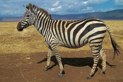Ngorongoro (59)