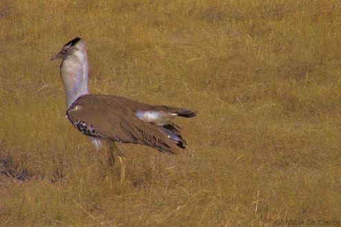 Ngorongoro (76)