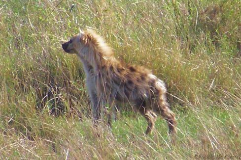 Serengeti National Park (107)