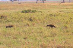 Serengeti National Park (108)