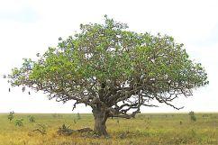 Serengeti National Park (118)