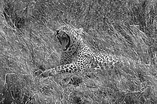 Serengeti National Park (142)