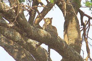Serengeti National Park (148)