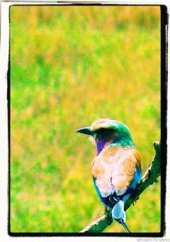Serengeti National Park (161)