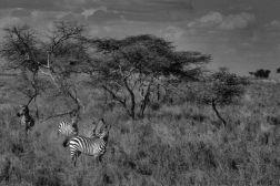 Serengeti National Park (184)