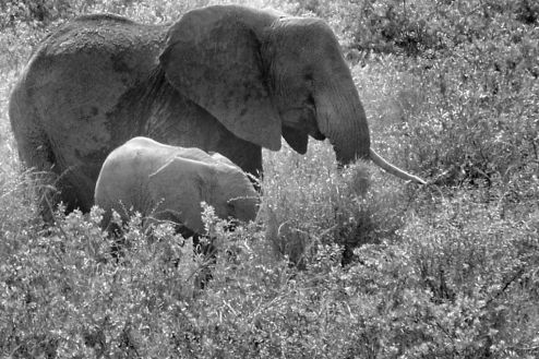 Serengeti National Park (187)