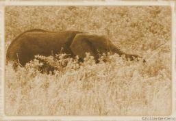 Serengeti National Park (193)