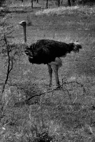 Serengeti National Park (20)