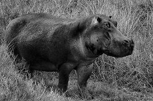 Serengeti National Park (202)