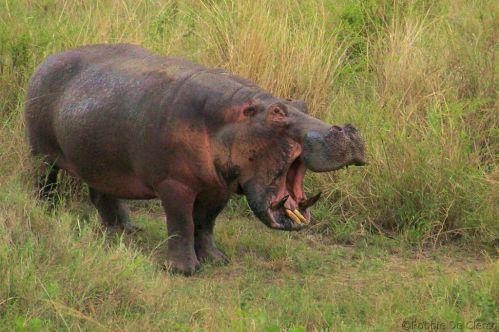 Serengeti National Park (203)