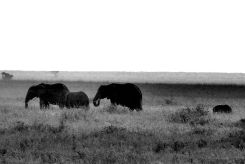 Serengeti National Park (248)