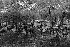 Serengeti National Park (33)