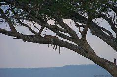 Serengeti National Park (46)