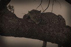 Serengeti National Park (49)