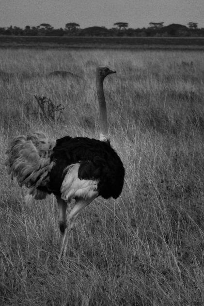 Serengeti National Park (57)