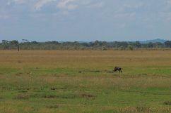 Serengeti National Park (7)