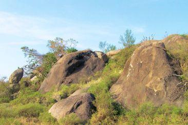 Serengeti National Park (76)