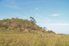 Serengeti National Park (78)
