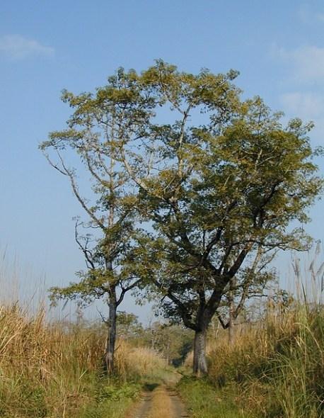 Chitwan 49