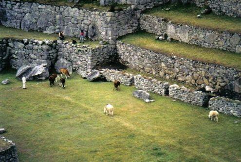 Macchu Picchu 29