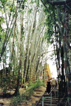 Tana Toraja 09 (babyboom)