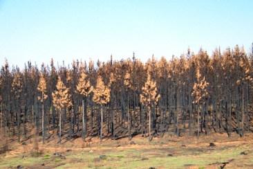 Blyde River NP 02 (restanten van bosbranden)