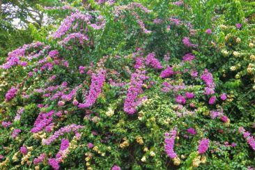 Botanische tuin (23)